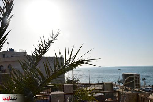 منظره رو به دریا اقامتگاه مان همیشه سبز بوشهر
