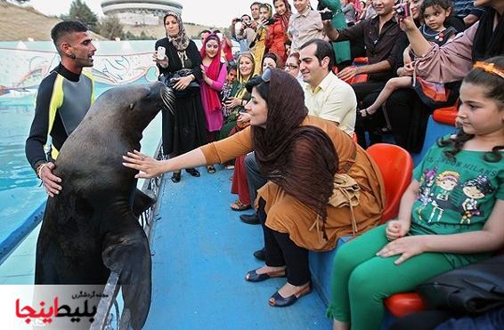 پارک دلفین ها در کیش زیبا