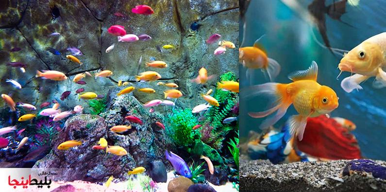 ماهی ها آاکواریوم در کیش