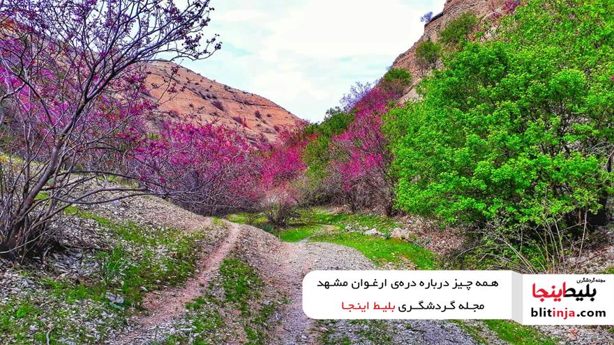 دره ارغوان در مشهد